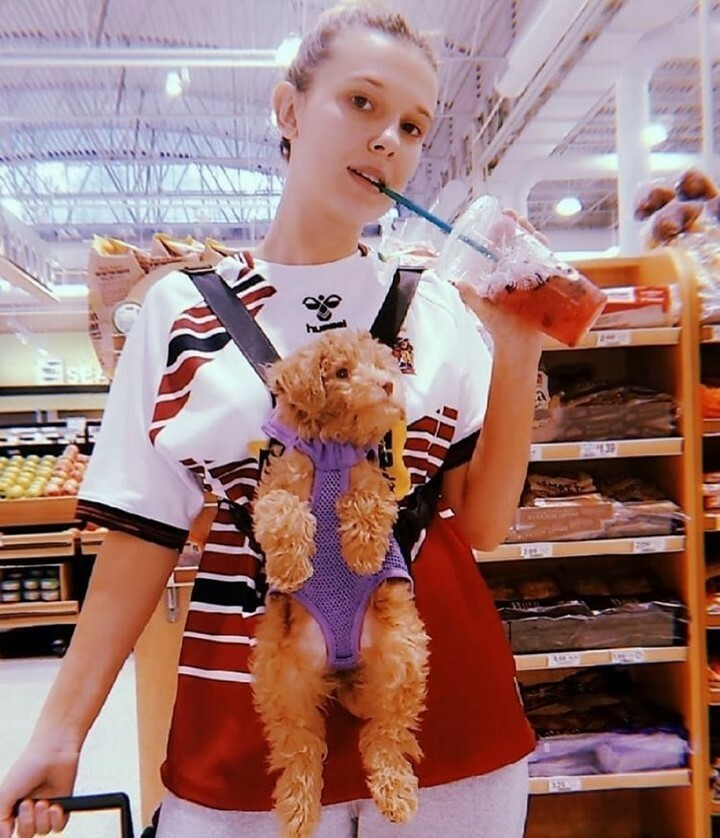 📷 #Repost @planet_of_millie_ . Very cutie🥰❤️ Have you got any pets?🧸 @milliebobbybrown . . #bubbletea #doggy #dog #puppies #milliebobbybrown #pets #mbbrown #mills #florencebymills #dunkindonuts #strangerthings