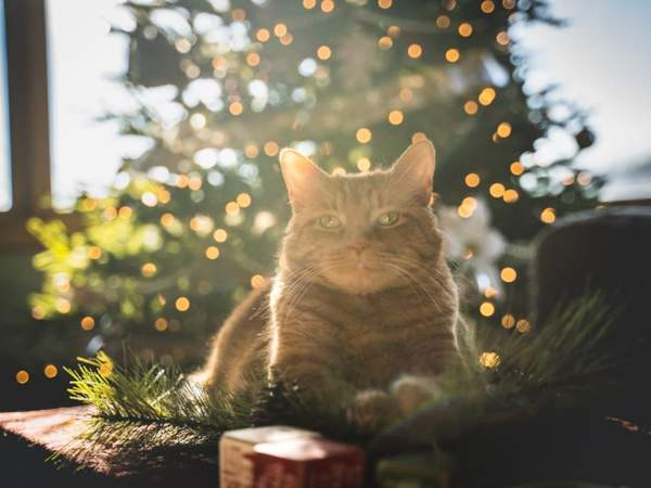 How to Cat-Proof your Trees for Christmas?  https://t.co/WuKcxWiLi4   #christmastime #christmas #christmastree #merrychristmas #christmasdecor #xmas #christmaslights #christmasiscoming #winter #christmasdecorations #christmasmood #santaclaus #christmasspirit #snow #natale #santa https://t.co/q7AcBH7rpF