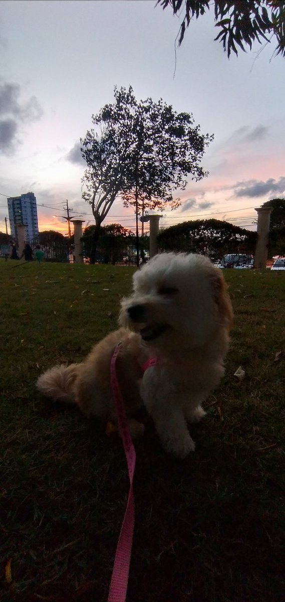 My beby #Dog  #love #sundayvibes #MovieMonday https://t.co/IMedc14z0E