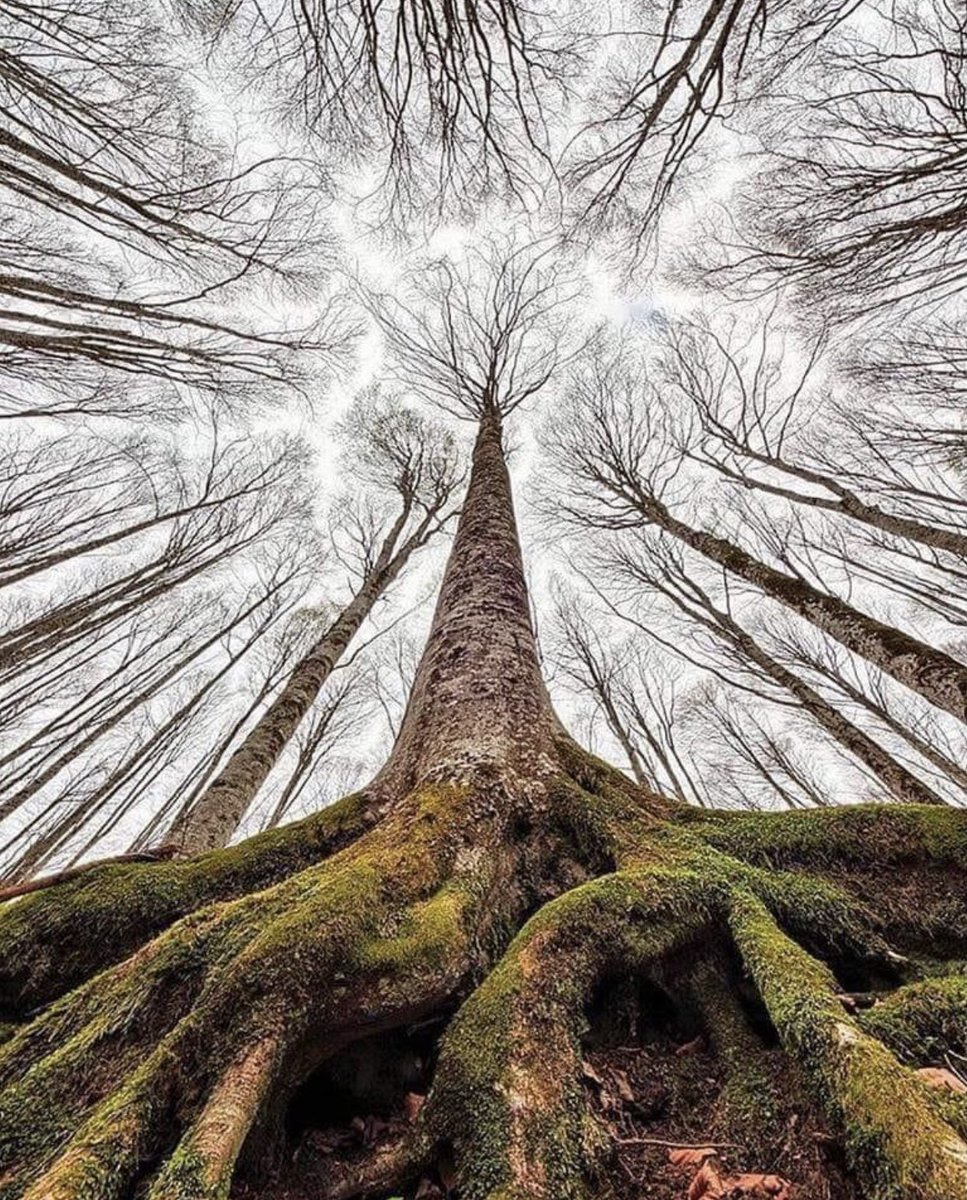 View from the forest floor.. My perspective..