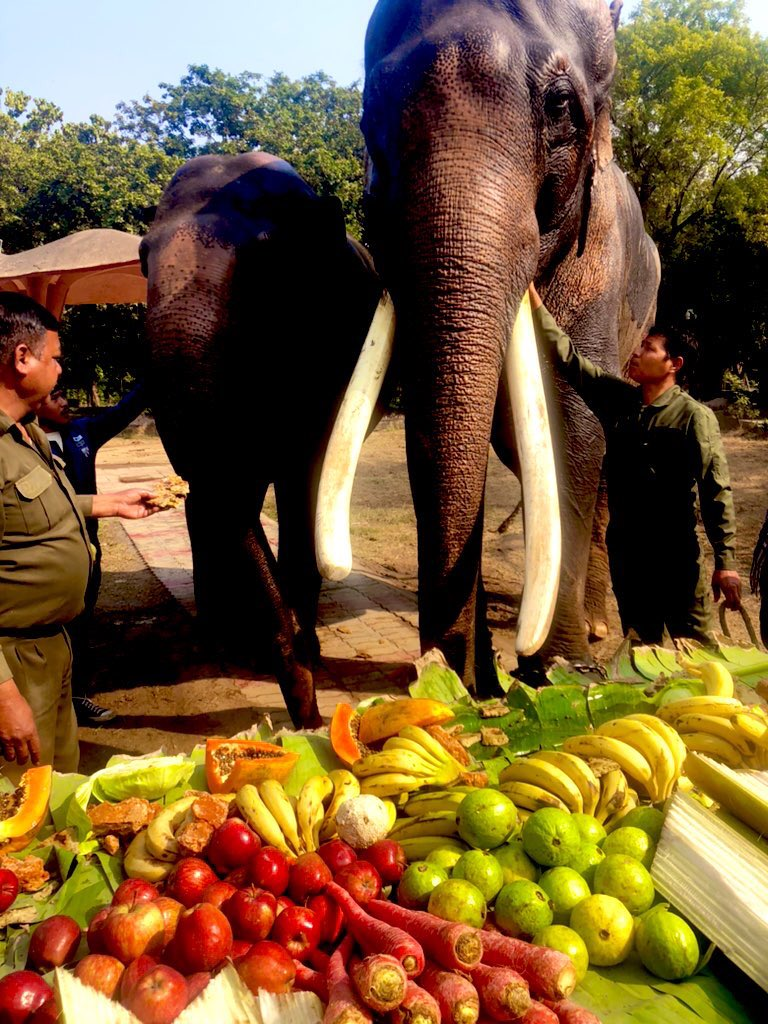 Here's how we are celebrating #RepublicDay2021 in National Zoological Park by enriching foods of our animals today. Kudos to team NZP for making this day special for our fellow friends.  Happy Republic Day 🐅🦚🐘🇮🇳  @CZA_Delhi @moefcc
