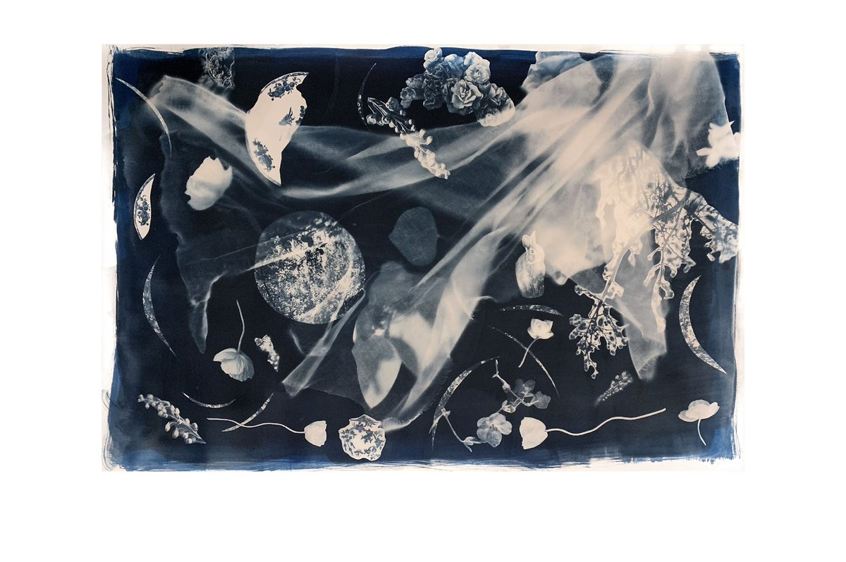 "New #cyanotype 45""x31"", 2021  #photography #art #sowa #boston #bostonsrts #bosarts #blue #worksonpaper"