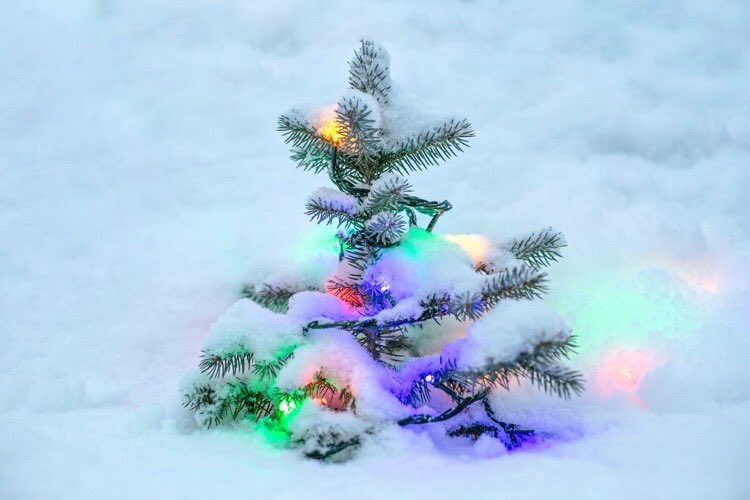 Good night my sweet elves. May you dream of Christmas🎄🎅🏻 #noel #Christmas #goodnight #countdown #winter #christmascountdown #christmasspirit #christmas2021 #holidays #christmasmagic #santa #santaclaus #believe #ChristmasMovies #MovieReviews #lights #night https://t.co/7UJC2xHmUx