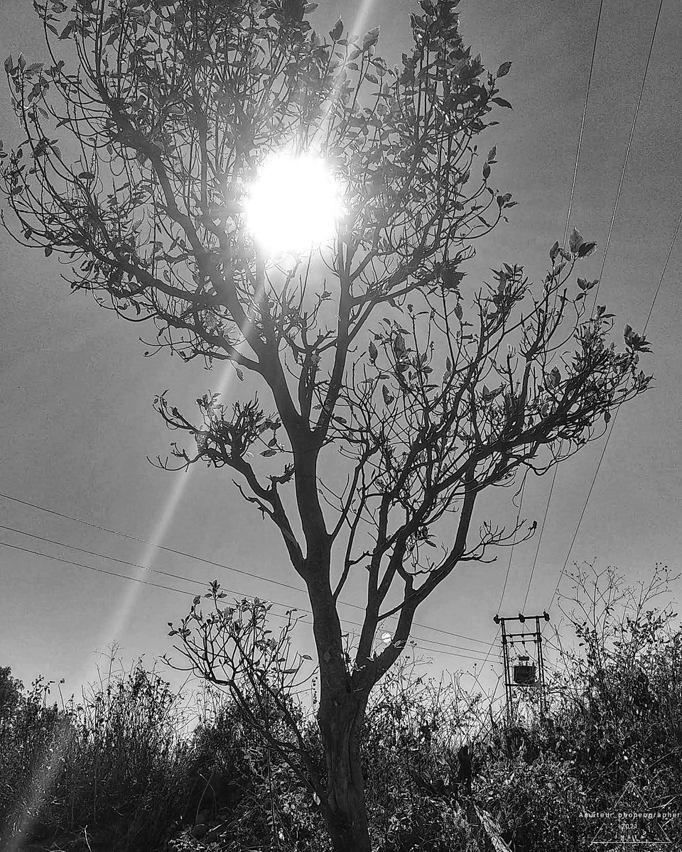 Sun's Hide n seek behind the tree 🌲🌞 #sun #tree #beautiful #be_amateur #tweetgen #instagood #instagood #picoftheday #photographyclub #photographers_of_india #PHOTOS #forestphotography #wildlife_perfection #wildlifephotography #naturephotography #nature #Photos