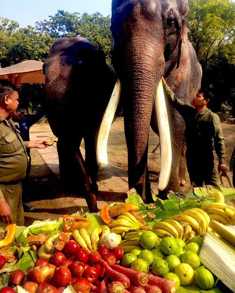 Here's how the #RepublicDay2021 was celebrated at the National Zoological Park in Delhi by enriching foods of the animals and making the day special for the fellow friends.   Happy #RepublicDay to all.  🐅🦚🐘🇮🇳