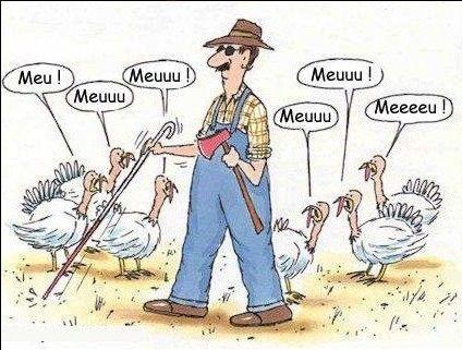 """Vous savez maintenant comment des dindes ont réussi à survivre à #Thanksgiving !  Pour découvrir la tradition de Thanksgiving, # jeuenchemise """"Food""""  Pour vérifier le lien entre les gallinacés et les bovidés : #lapbook """"Meuh"""" :"""