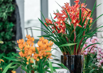 As #SpringFestival approaches, various #flowers and bonsai featured at scenic spots have hit the market. Come to the #Wuxi Modern Agriculture Expo Park and to celebrate the New Year in the best way possible!