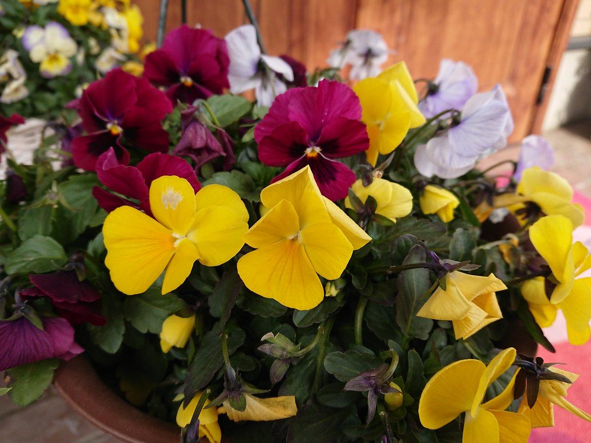 巣ごもりって言葉、 なんだか好きじゃない ステイホームって言うほうが スマートよね? もやもや気分にお花を。。 今日もお疲れさま(*^^*)  #flower #flowers #花が好き #花写真 #ファインダー越しの私の世界