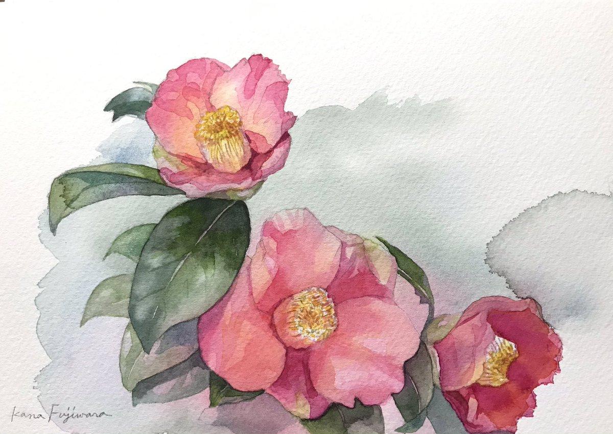 椿 #sketch #watercolor #watercolorpainting #Flowers #椿 #水彩画 #Waterford #花 #花の絵