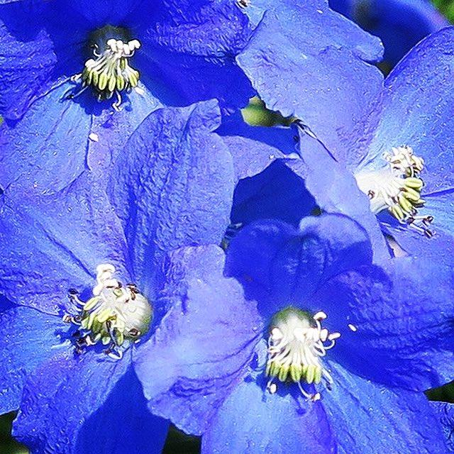 #flower #flowers #beautiful #plant #plants #botanical #植物 #花 #お花
