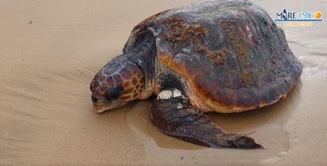 Una testuggine ferita trovata in spiaggia dell'Agrigentino, portata da veterinario - https://t.co/ImFqz8cXeb #blogsicilianotizie
