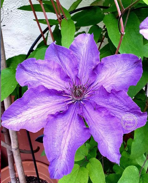 .@Vonlutzie Guten Morgen Lutzi und wünsche dir einen wunderschönen Dienstag #flowers 😊!