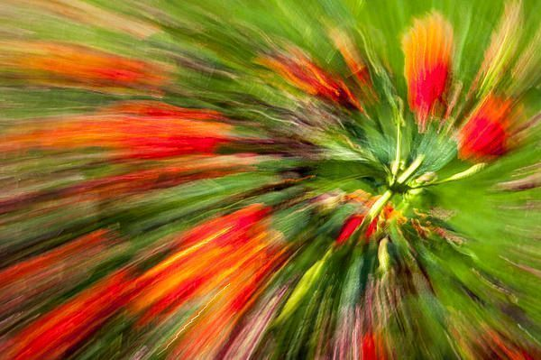 Art for the Walls!  #abstract #art #artworks #picoftheday #photooftheday #flowers #fineartamerica #saatchiart