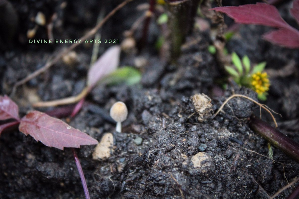 grounding photo meditation🌱#feel the #energy and #connect #grounding #earthing #beauty #photography #art #artist #frequency #meditation #gaia #earth #oneness #Awakening #spiritual #spiritualawakening #spirituality #universe #source #love #dirt #leaves #mushrooms #dandelion #mud