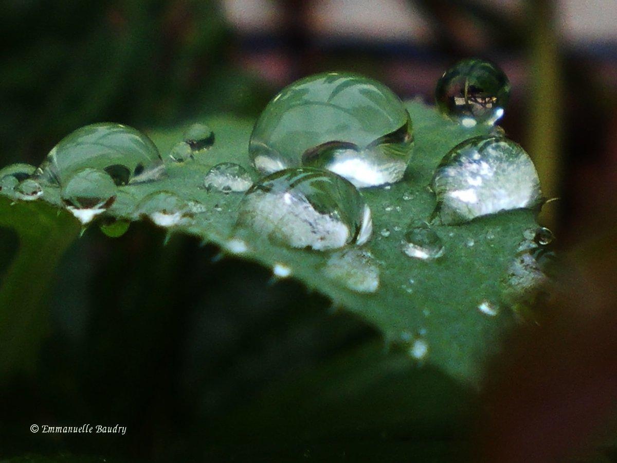 Laisse-moi pleurer, photographie macro 30 x 40 cm par Emmanuelle Baudry - Let Me Cry, photography macro avalaible here: 👉 #macro #drops #gouttes #pluie #rain #nature