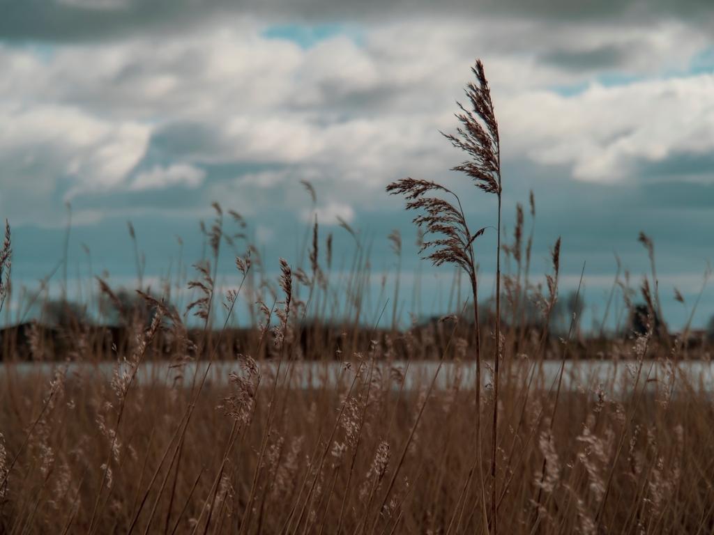 Reeds at Wheldrake Ings, North Yorkshire, England  #Yorkshire #nature #naturephotography #photography