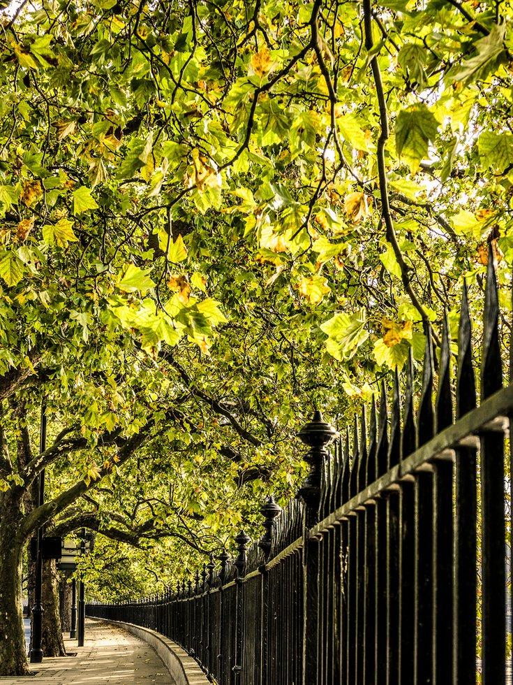 Autumn Walk LONDON … by @fitzlaura2012 #photography #art  @artfinder