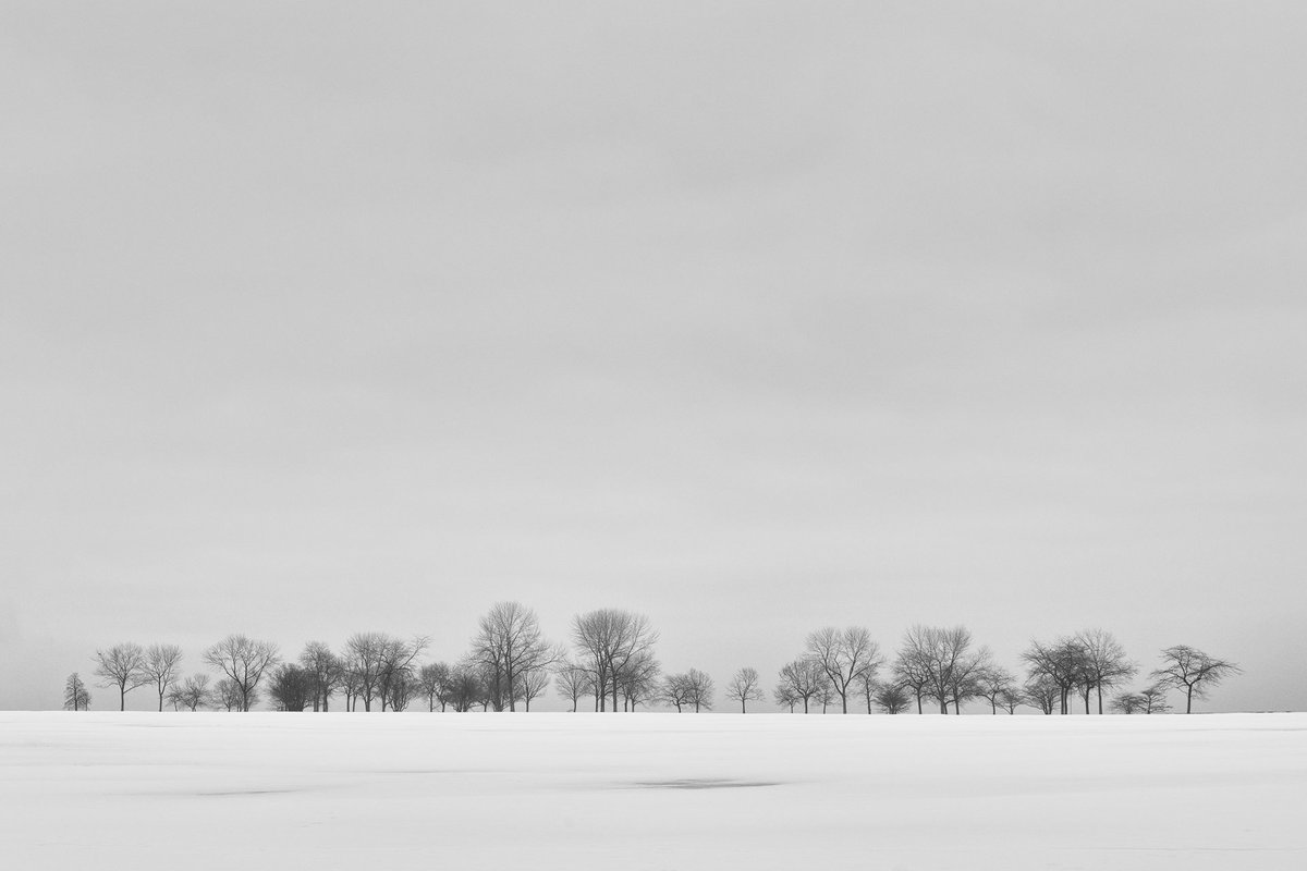 Cold Horizon. Click for more:  A line of trees on the horizon on a cold and snowy winter morning in Milwaukee, Wisconsin's Veterans Park. #winter #photography #horizon #still #calm #minimal #art #wallart #cold #blackandwhite