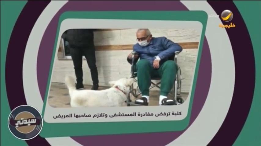 Replying to @sayyidaty: وفاء الكلاب.. كلبة ترفض مغادرة المستشفى وتلازم صاحبها المريض  #برنامج_سيدتي #روتانا_خليجية