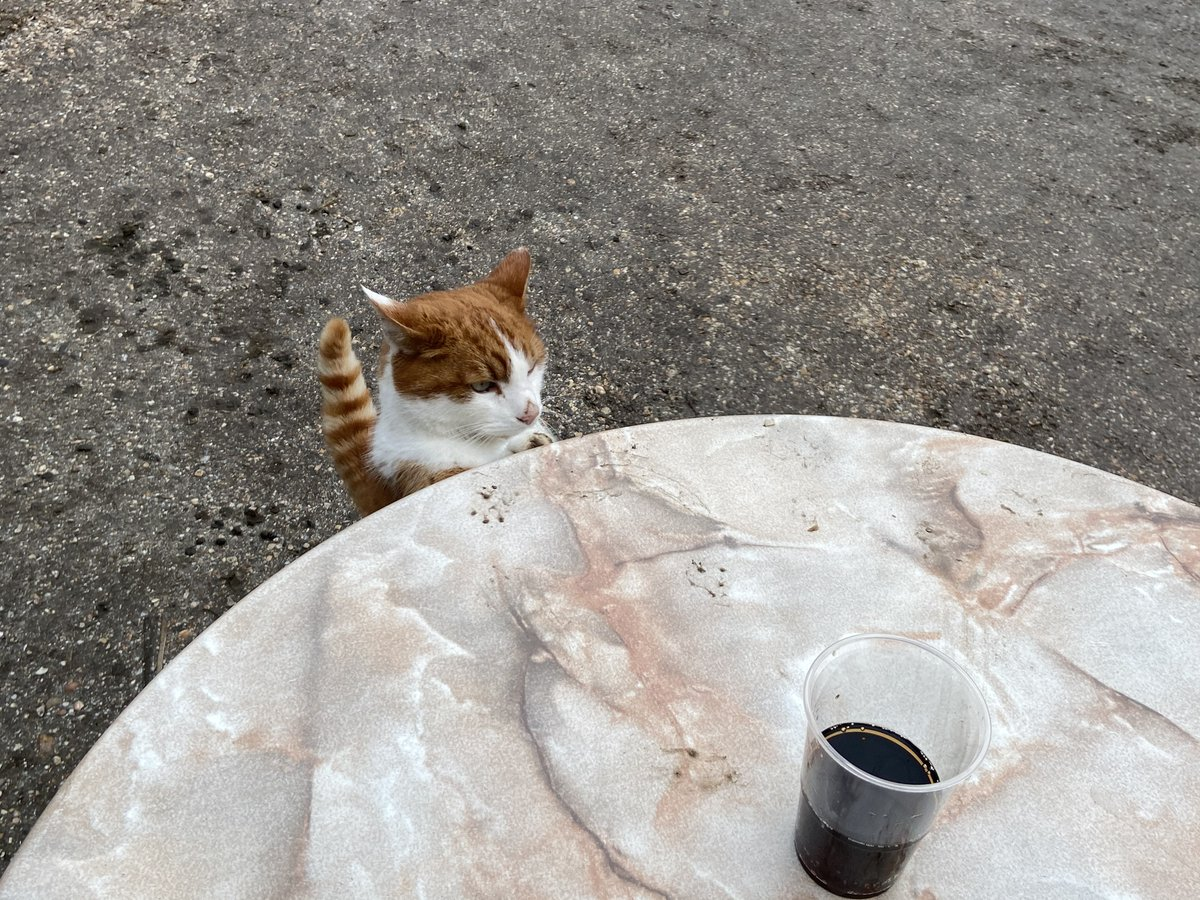 The farm cafe in Cronesteyn has a take-away stand set up. Snoopy, one of their two resident cats, was eager to steal my Fritz Cola on Sunday afternoon. May his steadfast determination inspire you during the final hours of your work day. #cat #farms #Leiden #soda