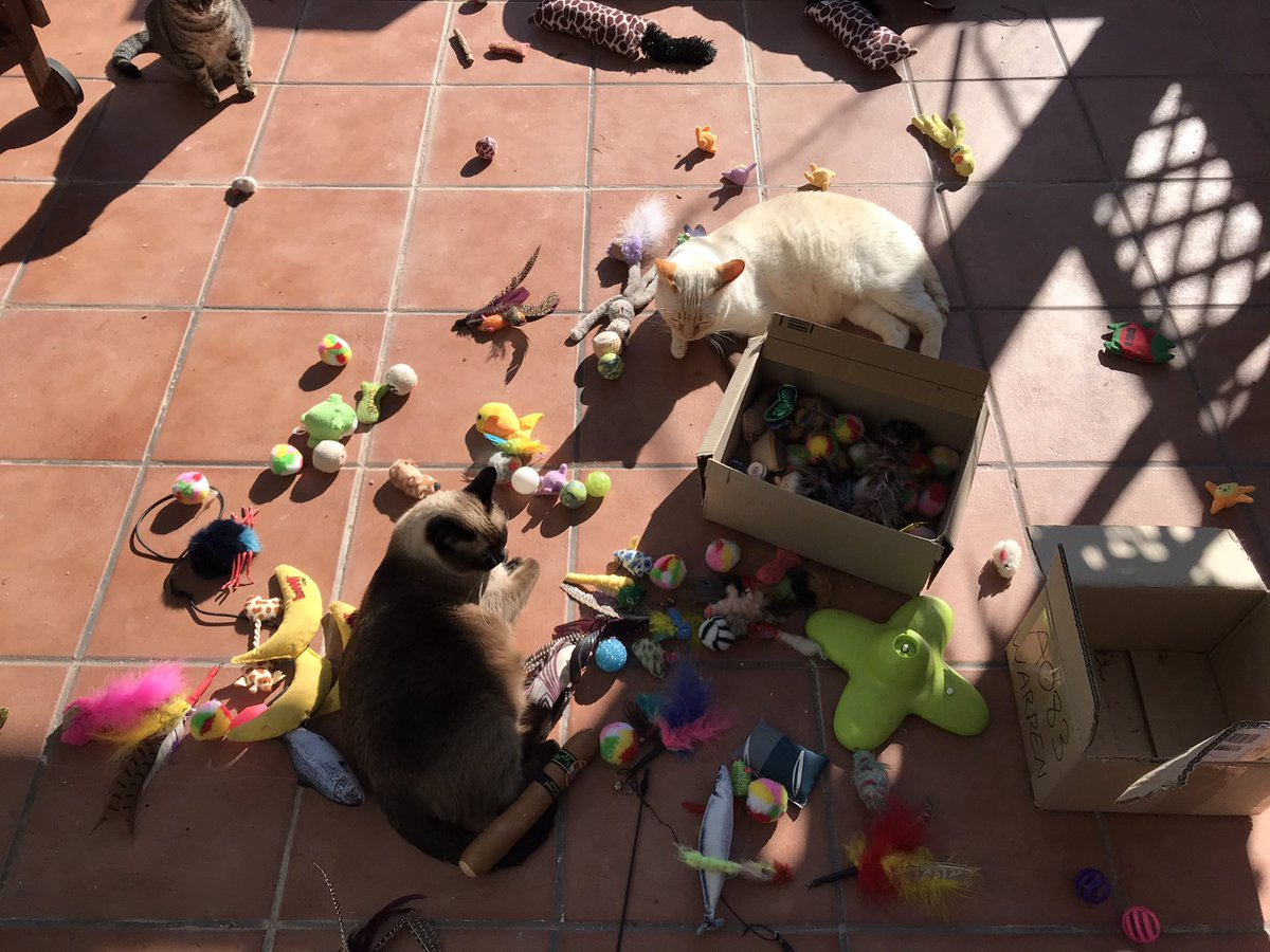 Helping sort out our toys. We think we might need some more? #ToyTuesday #TuesdayThoughts #TuesdayMotivation