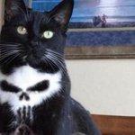 猫の胸元にドクロが・・・!自然でこれはすごくないか!?