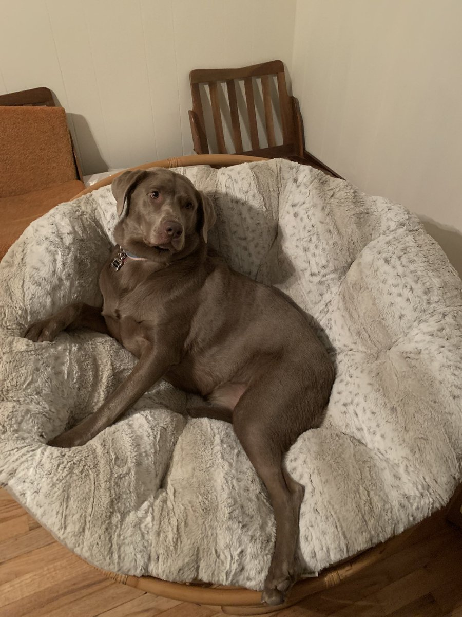 definitely believe i have the cutest dog in the world 🥺🤷🏽♀️ i raised her to be sweeter than sugar and she keeps a smile on my face nmw . #appreciationpost #silverlab #mybaby #mommybaby https://t.co/4W7gCEgeNe