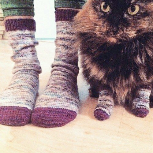 When you and your furkid match 🧦🐈 #TuesdayThoughts #MatchingSocks #CatsOfTwitter #AnimalLovers #Cats