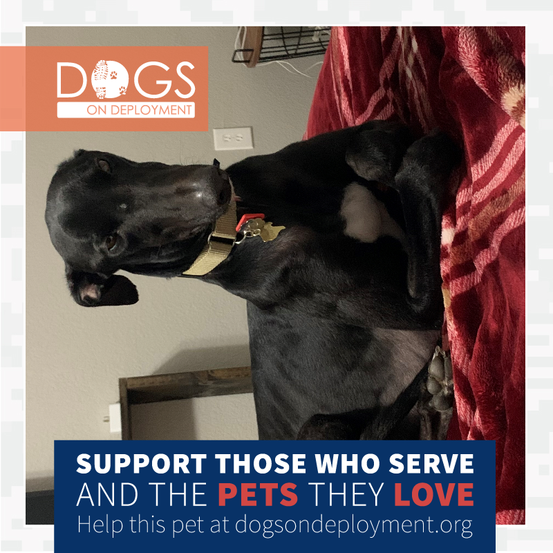 Miller from Virginia Beach, VA is looking for a #DoDBoarder, 1/29/21-2/2021.  #Navy mom will be away for deployment.  If you can board, please register & log on to .  #DogsonDeployment #DODMission #Love #Fund #Board #DoDPetInNeed #DoDFoster #VirginiaBeach