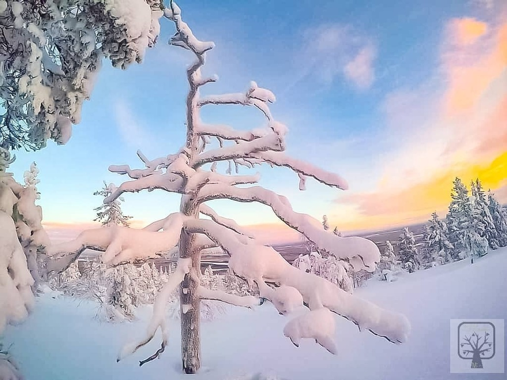 Snowy Finland.  . . #snow #snowy #winter #winterwonderland #naturephotographer #nature_perfection #naturelove #finlandlovers #finland #lapland #leviniglut #levi #seetheworld #treestagram #trees #finnisnature #amateurphotography #real_amateur_photography