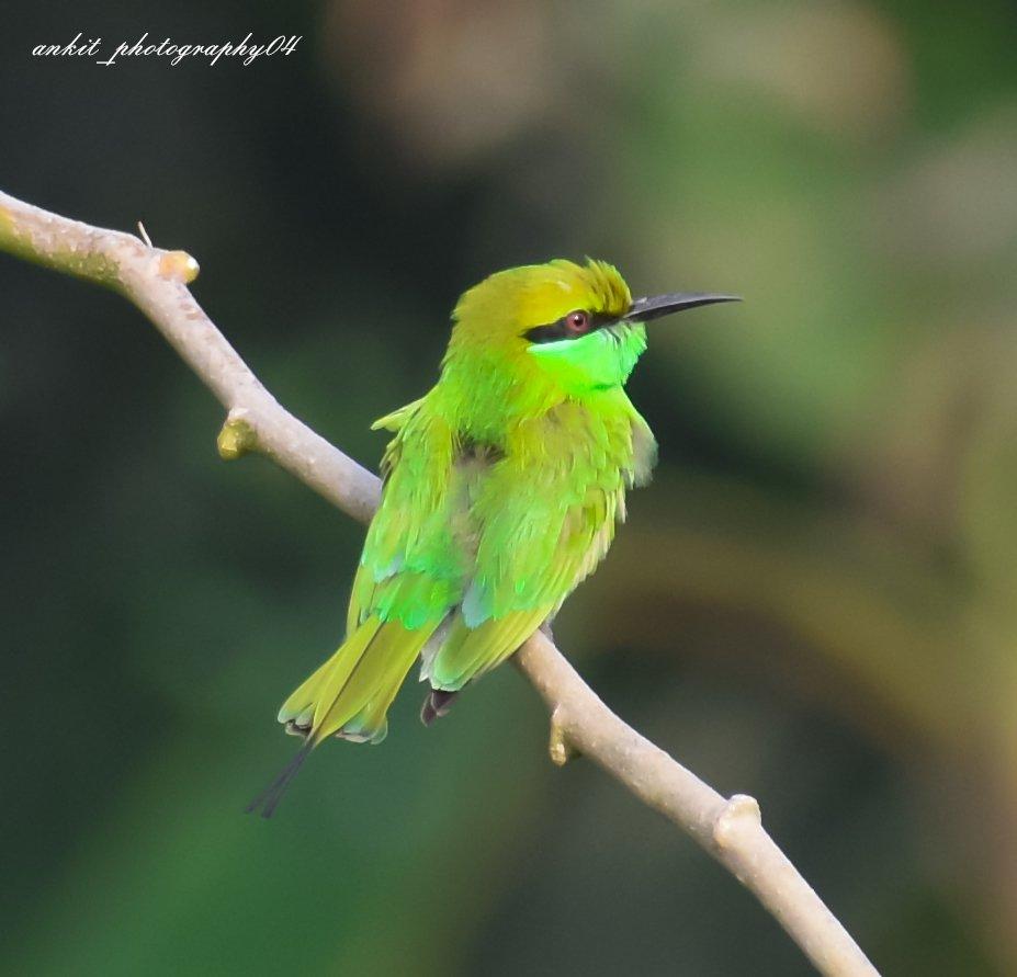 Green Bee Eater 😍 #photography #nature #birdphotography #greenery #PhotoOfTheDay