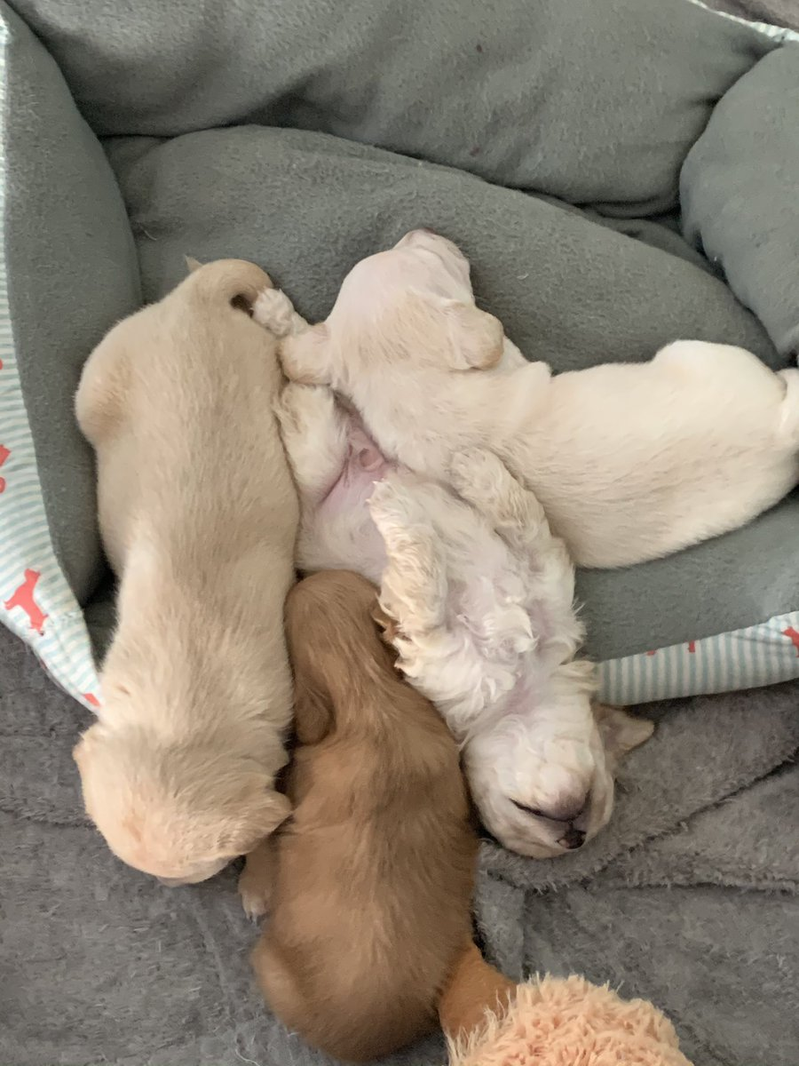 I'm so happy I can sleep again and when I wake up there's no Presidential crazy or just mean tweet! I want to chill like these Rescue Puppies - especially the one on it's back lol!  #tuesdayvibe