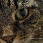 Image for the Tweet beginning: Das Auge des Tigers 😻