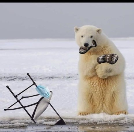 Sanders & Polar Bear