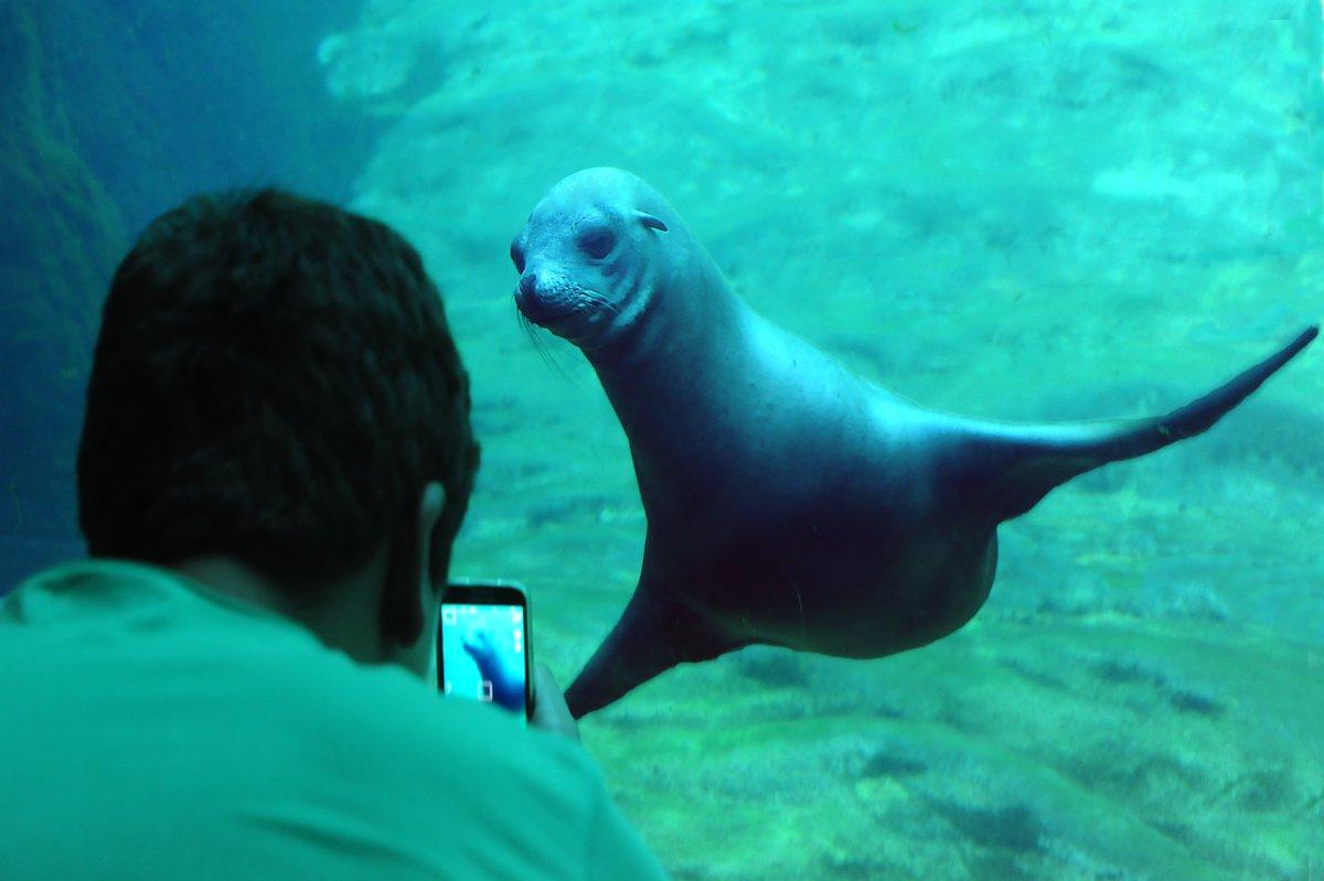Valencia aquarium -