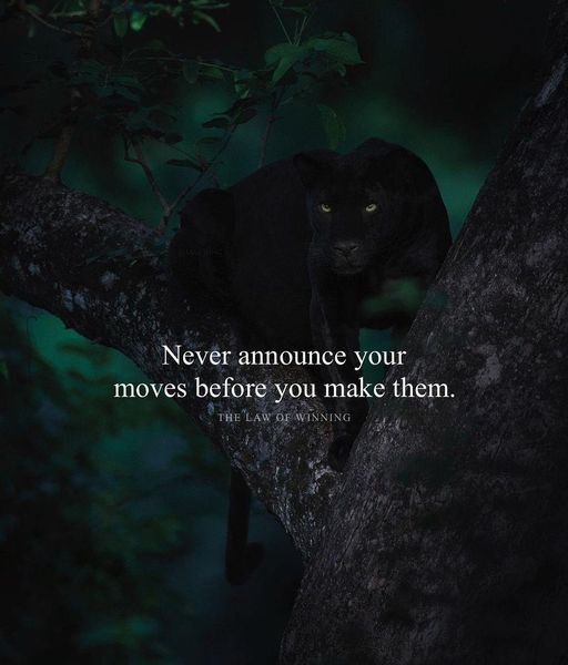 """Never announce your moves before you make them.""🤫  #Wisdom #LifeLessons #InspirationalQuotes #MotivationalQuotes #MentalHealth #StriveForGreatness #Success #Mindfulness #Mindset #TuesdayVibe #TuesdayMotivations #PositiveVibes #GoodVibes #Life #WednesdayThought #Integrity #Truth"