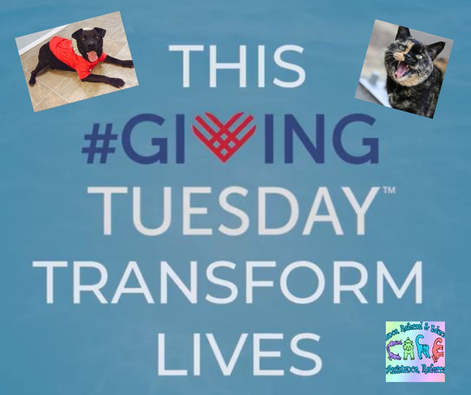 #givingtuesday - Your support makes it possible to give animals from a lifetime of cruelty & pain.   Give them a second chance at life - use this link or our easy paypal link in the left column of our website to send a little luv to the fur folk!