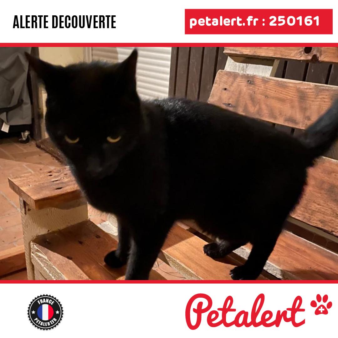 Trouvé #Chat #IndreEtLoire #NeuilleLeLierre #Petalert  #PetAlert37 /