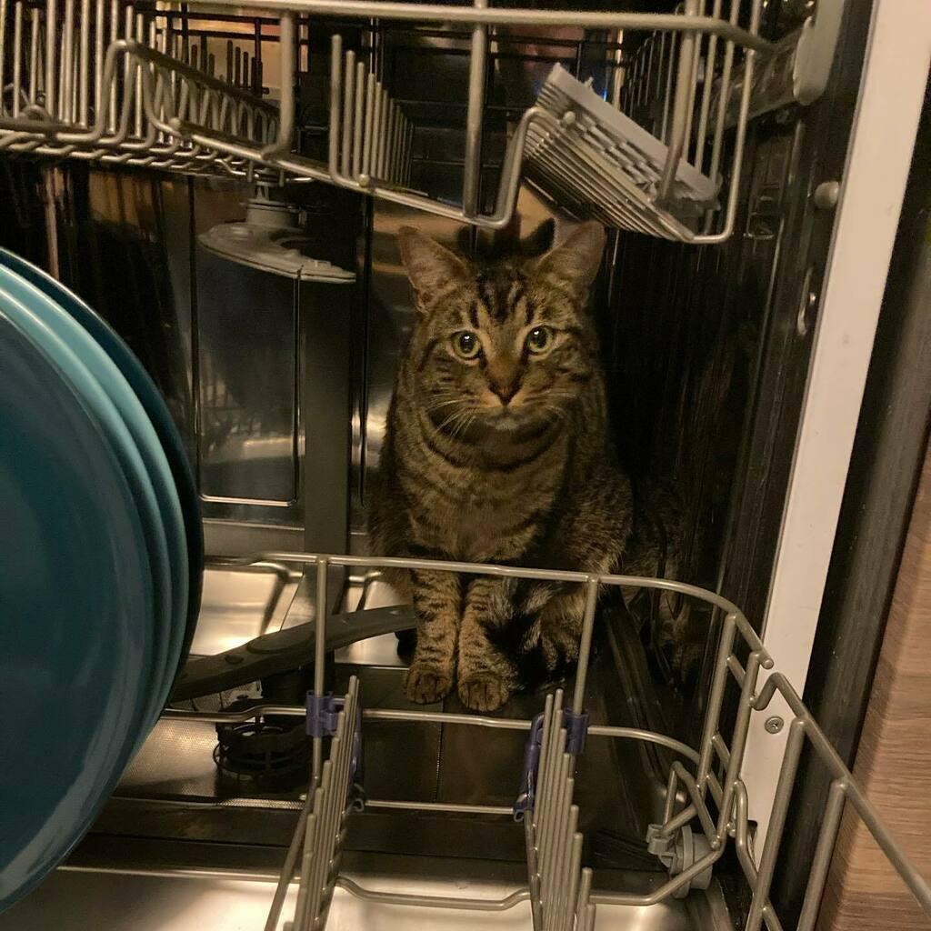 Ma passion c'est lamachinalaverlavaisselle #chat #cat #neko