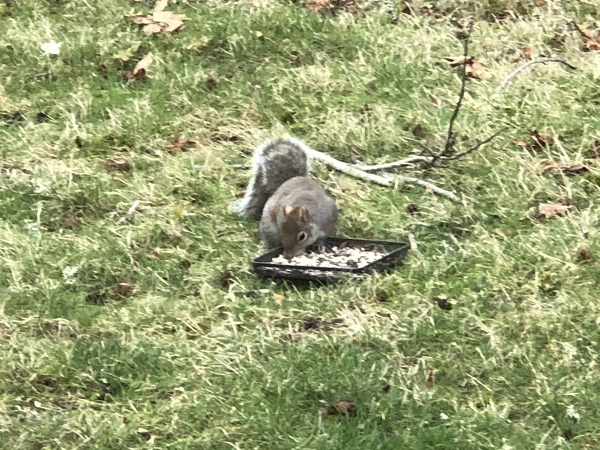 @slackrgurl Cool! The only thing we have is a fat little squirrel feasting on the birdseed buffet Alice put out this morning.