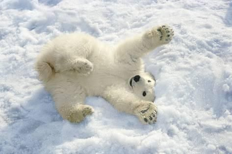 Snow can be fun... for little Polar Bears. ❄️  #winter #fun #bear