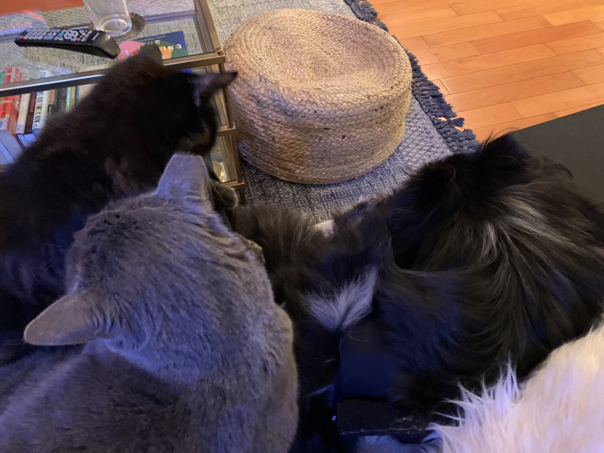 This was the scene here tonight as I got to watch #ProdigalSon w/you guys. I really loved this ep- hope you did too! Thank you for sharing tonight w/us & for being a part of this amazing family. I'm sending each of you so much love! Sadie, Button, & Razor are too. 🥰❤️🐶😻💗😻🎉