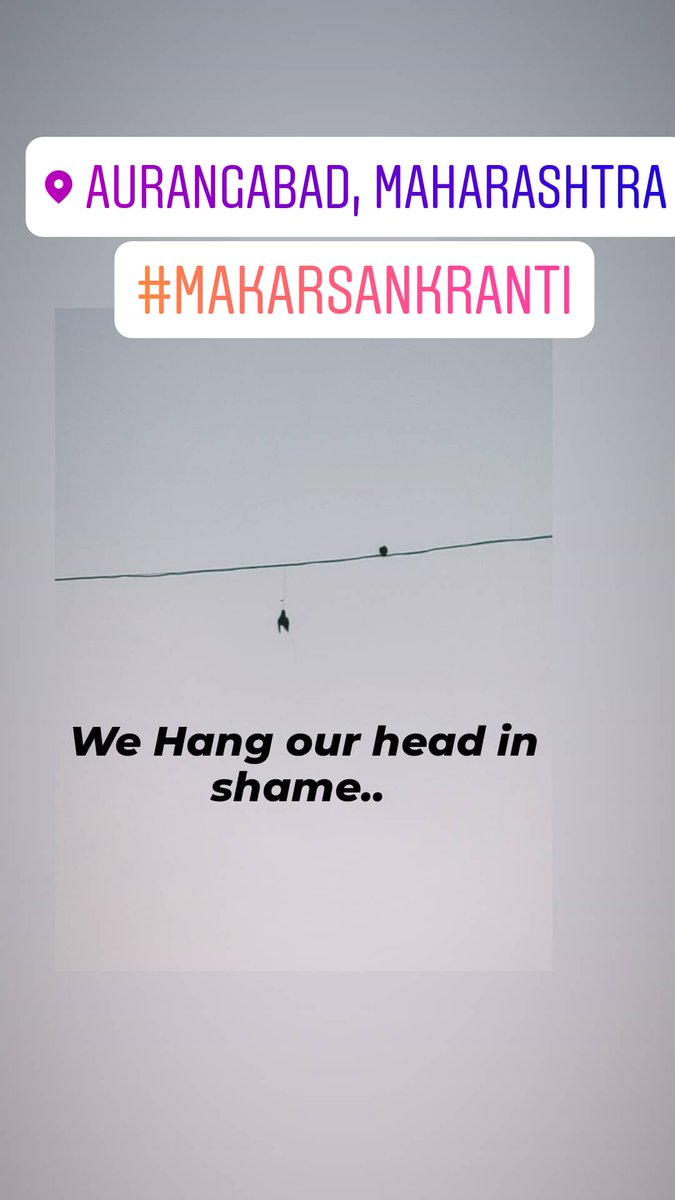 """We Hang our head in shame.. Hundreds ofbirdsare grievously injured every year by glass-coatedkitestrings (locally called """"Manjha"""") that are used forflying kites.#makarsankranti"""