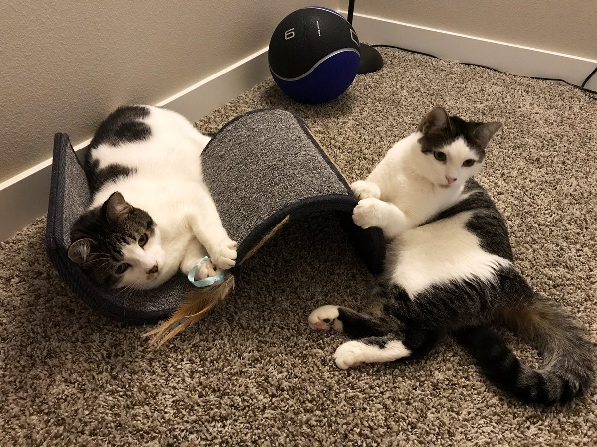 Hi, we're Leo (left) & Luna (right), 1 year old twins adopted one year ago. We love our mom & dad, & are looking for lots of furfriends to share our adventures with. #CatsOfTwitter #cats #CatsOnTwitter