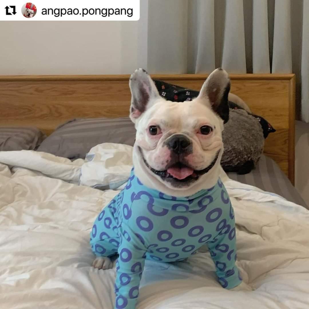 #dog!!(night)