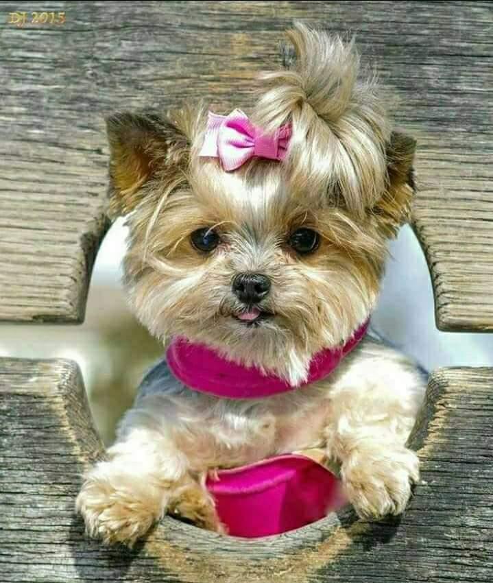 #dog!!(beautiful)