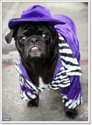#dog!!(cute)