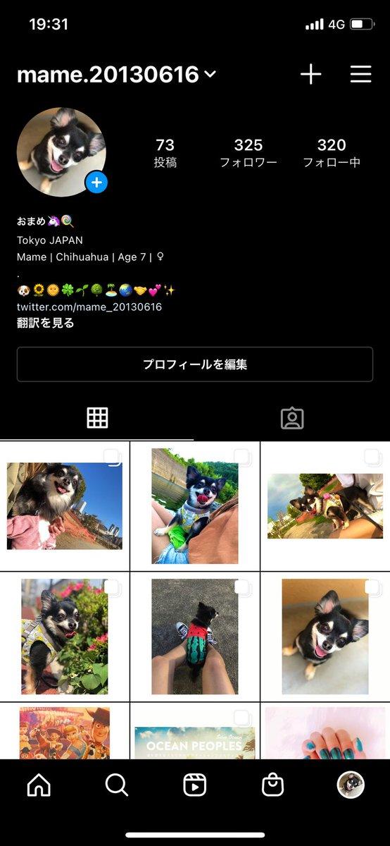 Twitterにはリアルなまめさんがいますが、インスタにはちゃんとキラキラしているまめさんがいてます🥰   ️ #チワワ #まめ #犬 #愛犬 #家族 #ペット #犬好き #chihuahua #mame #family #dog #pet #animal #pets #chihuahualover #doglover #mydog #followme