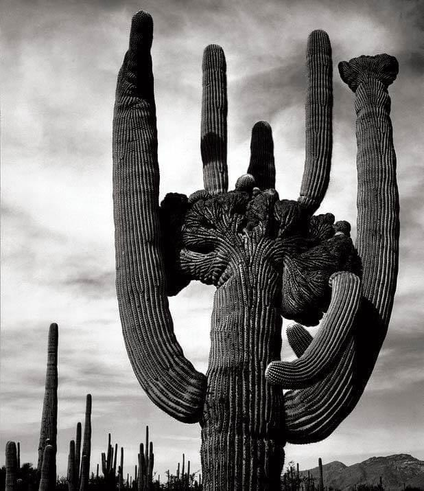 Ansel Adams  #anseladams #photography #art #photographer #photogallery #nature #beautiful #love #travel #blackandwhite #bnw #cactus  #reflection #shadow #light  #minimalism #simple #landscape #streetphotography #portrait #blackandwhitephotography #simpleisbeautifulphotography https://t.co/Afl19lWUDR