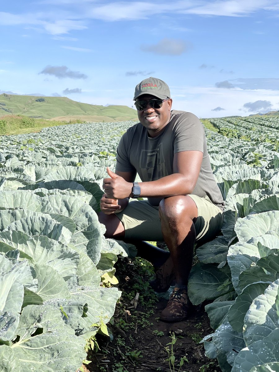 #DownToEarth with @AngieKhumalo Today we speak to Thabani Bhengu founder of Ndela Farming established in 2009 selling Cabbage and mielies #TheKingsSuite